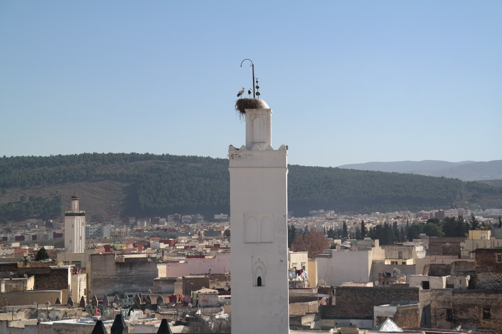 Medina-Sefrou-seen-from-the-roof